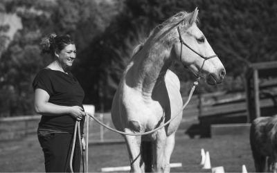 Horses in Animal Assisted Psychology