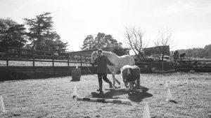 Naomi Rossthorn Horses