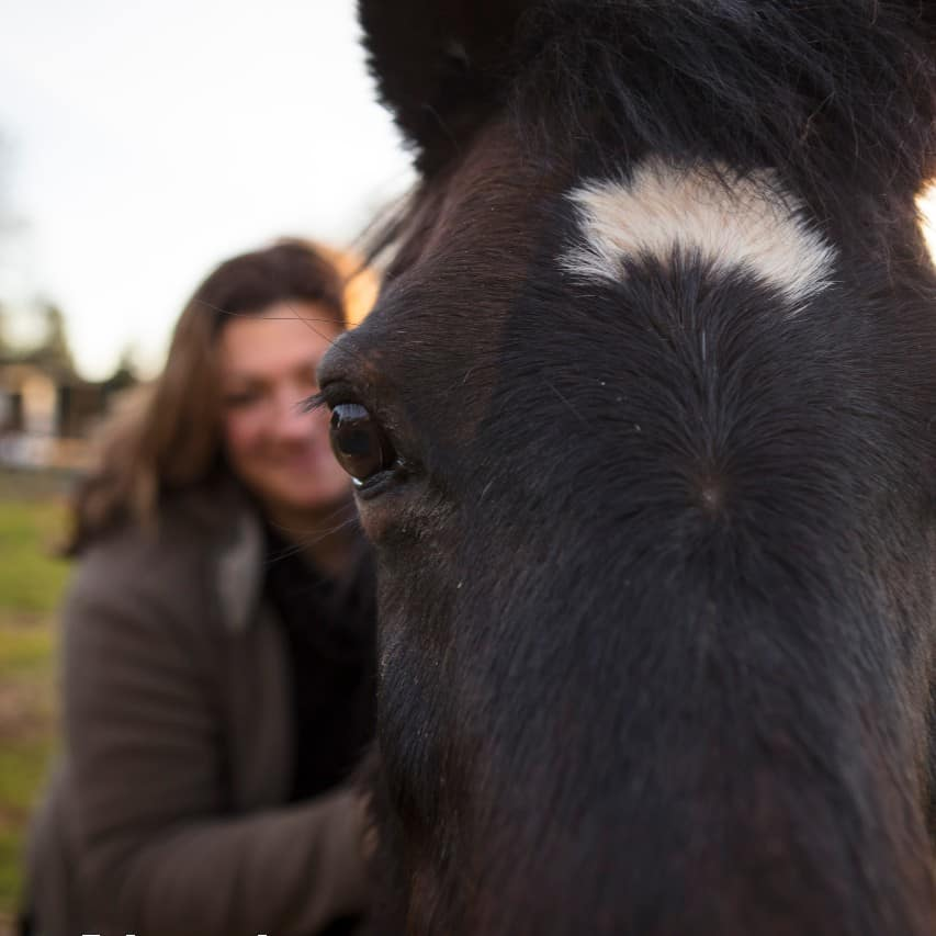 Equine assisted psychology