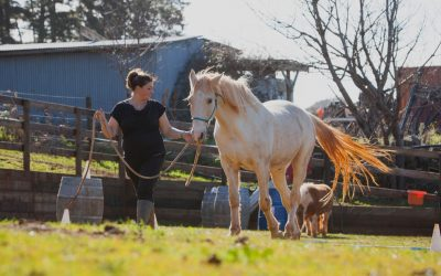 Children recovering from chronic illness and equine assisted psychology