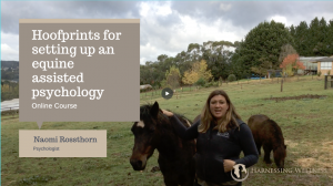 Setting up an equine therapy clinic